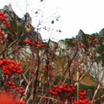 秋の中央アルプス。伊那前岳に続く美しい稜線