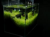 石組小型レイアウト水槽を作る part.4(Final)
